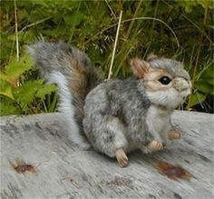 "Plush Gray Squirrel. Never have seen a ""gray squirrel"" before . . ."