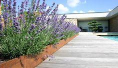 Lavendelzeile - schön gegliedert durch unterschiedliche Höhe mit Cortenstahl