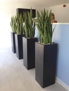 Unique Modern Precast Planters To Make Your Outdoors Stylish So accessories such as modern outdoor planters are starting to gain popularity, their designs being more interesting and innovative than ever. Modern Planters, Concrete Planters, Outdoor Planters, Garden Planters, Outdoor Decor, Modern Vases, Deco Spa, Lawn Edging, Office Plants