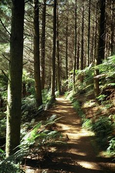 Personally, I have to say that the bush walks here in New Zealand are really nice; it really gets you closer to nature, even if your not a nature person! Beautiful World, Beautiful Places, Beautiful Forest, Into The Wild, Oh The Places You'll Go, The Great Outdoors, New Zealand, Paths, Woodland