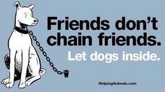 Or at least give them a yard with space. I hate it when people leave dogs on short little chains.