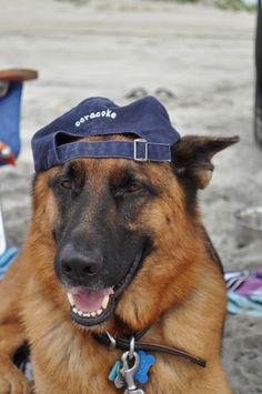 Description: Gunner (the German Shepherd). Sheri Ryan photo. www.OcracokePetHomes.com