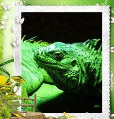 Hidrossauro-das-filipinas Blog, Nature, Garden, Animals, Philippines, Flowers, Blogging