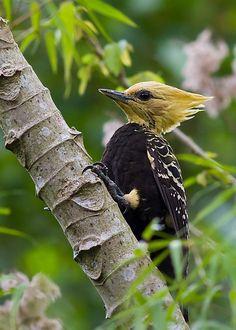 Rare Birds, Exotic Birds, Colorful Birds, Photo D Art, Beautiful Bugs, Pretty Birds, Wild Birds, Bird Watching, Beautiful Creatures