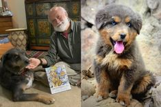 The Serendipitous Story Of How A Stray Dog Changed A Former U.S. Ambassador's Life | Here & Now Australian Shepherd Puppies, Australian Shepherds, He Is Alive, The Donkey, Kids Writing, Stray Dog, Dogs, Life, Animals