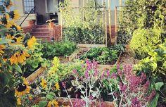 Front Yard Veggie Garden - share your extra veggies with neighbors Landscape Structure, Landscape Design, Potager Bio, Back Garden Design, Backyard, Patio, Landscaping Tips, Back Gardens, Garden Projects