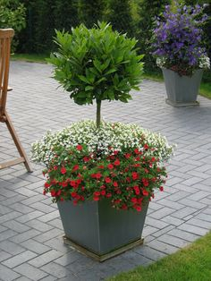 Kübelbepflanzung für Terrasse und Balkon