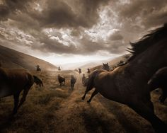 Pendleton Horses- when I was younger (okay last night), I used to dream of jumping on a wild horses back and running with them, completely free