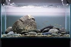 Image result for river manifold tank