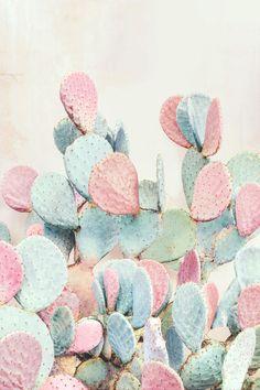 Beautiful multicolor plant