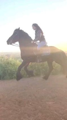 Cute Song Lyrics, Cute Songs, Horse World, Beautiful Horses, Pigs, Equestrian, All About Horses, Adorable Animals, Horses