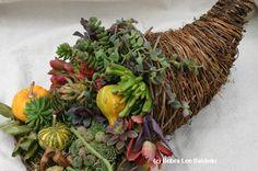 Succulent Cornucopia- design and photo by the incomparable Debra Lee Baldwin.