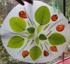 Nature Mandalas --- the kids are soooo making these today!!