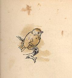 bird on a bough