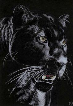 Panther 1
