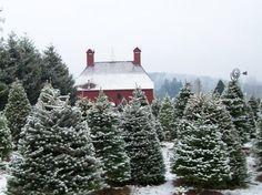 Start a Xmas Tree Farm