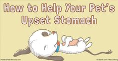 If your pet suffers from the occasional upset tummy, and your vet confirmed that she is healthy, try these natural remedies to help your pet feel better. http://healthypets.mercola.com/sites/healthypets/archive/2016/09/04/upset-stomach-remedies.aspx
