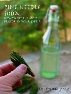 Pine needle soda: A gourmet ode to your pine tree