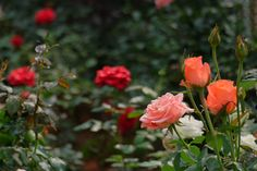 Colors of Love by trinhhoaitri on 500px