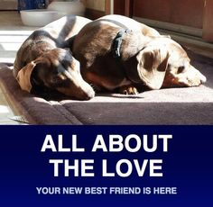 Meet Chloe & Lucy, a Petfinder adoptable Dachshund Dog | Morrisville, PA | Greetings!  We are Chloe and Lucy and we want to introduce ourselves!  We are two sisters that make...