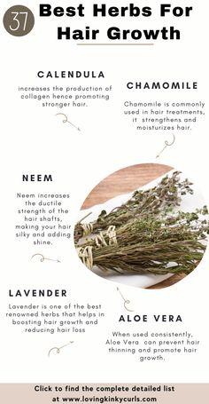 Herbs For Hair Growth, Hair Growth Tips, Natural Hair Growth, Natural Hair Styles, Ayurveda Hair Care, Magic Herbs, Hair Regimen, Moisturize Hair, Hair Remedies