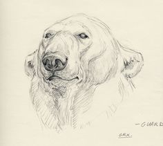 Pencil Drawings Of Animals, Animal Sketches, Art Drawings Sketches, Art D'ours, Bd Art, Bear Sketch, Lion King Drawings, Graphite Art, Sketchbook Inspiration