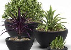 Plant set   Vwartclub