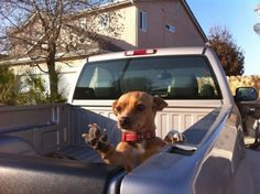 This pooch wishing you farewell. | 61 Images Of Animals That Are Guaranteed To Make You Smile