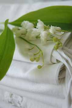 I need Lily of the Valley in my gardens.  No one sells small bouquets of this flower.