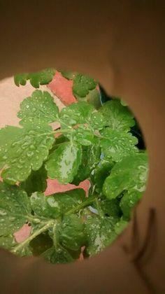 Rainy leafs inside a hole