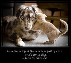50 Best Dog Quotes images in 2013   Dogs, Dog quotes, I love