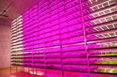 Indoor Future Led Farming