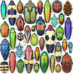 Creative Sketchbook: Christopher Marley's Mesmerizing Metallic Bugs!
