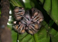 Bat Bouquet | Community Post: 11 Trees Sprouting Animals