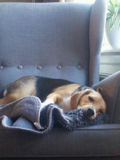 Koos de beagle, ff chillen