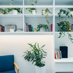 Studio Shoot, Shelves, Home Decor, Shelving, Decoration Home, Room Decor, Shelving Units, Home Interior Design, Planks