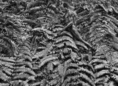 By photographer Sebastiao Salgado: A Yali man in the Jayawijaya mountains of West Papua, Indonesia