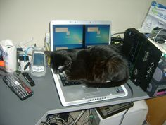Slow Internet speeds are literally putting these adorable critters to sleep. Cat Sleeping, Cute Cats And Kittens, Kitty, Early 2000s, Laptop Computers, Archive, Sign, Random, Board