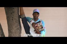 I heard Katty do splits on trees, now i do splits on trees! #splitsontrees