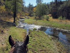 Riding at Geronimo Trail Guest Ranch in New Mexico during the fall with its changing leaves.