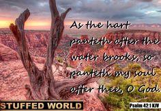 Stuffed World http://www.amazon.com/dp/B01ACNZ95K #StuffedWorld