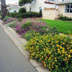 14 best yard re-design, zone 8a images on Pinterest | Front gardens Zone A Low Maintenance Garden Design Html on