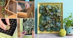 Living Succulent Picture - plant decoration which saves place!