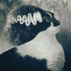 Bride of Frankenkitty.