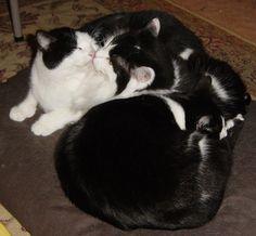 Black & White Cat Clump