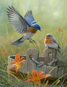 Eastern bluebirds - both males