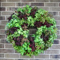 Coleus Living Wreath by Ivan Micek. No tutorial, just find instructions on pinterest for a living wreath and use coleus in place of succulents etc.