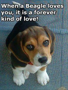 Forever kind of love! #dog #dogquotes #inspiration http://www.nojigoji.com.au/
