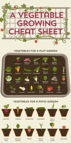Vegetable Gardening Guide: what veggies to grow for plot vs. patio gardens