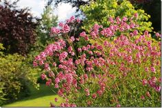 Top 10 Successes In The Garden This Year Every season has its successes and failures, some more so than others. See how I fair in my garden this year